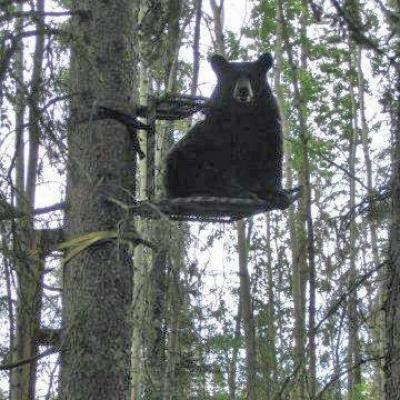 Bear In Deer Stand General Discussion Forum In Depth