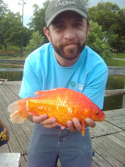 Big goldfish carp suckers rough fish in depth outdoors for Large pond goldfish